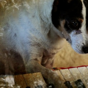 Heart of a Dog (2015) de Laurie Anderson