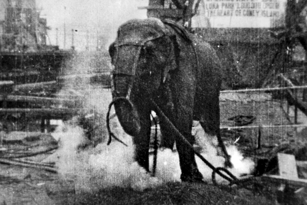 Electrocuting an Elephant (1903) de Edwin S. Porter e James Blair Smith