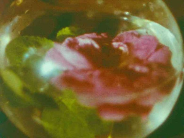 Anticipation of the Night (1958) de Stan Brakhage