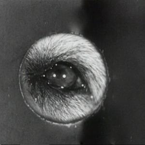 Riff-Raff (1947) de Ted Tetzlaff