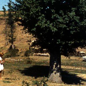 Trás-os-Montes (1976) de António Reis e Margarida Cordeiro